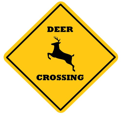 Accidents involving deer are on the rise
