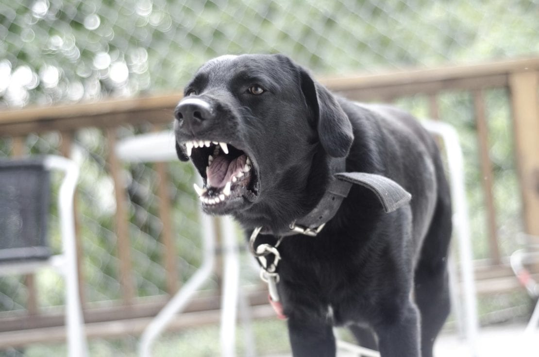 Angry Black Dog Stock Photo